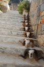 Buffalo sculls on stairs